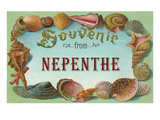 Seashell Souvenir from Nepenthe  California