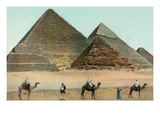 Camels by Pyramids  Egypt