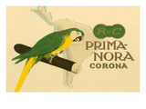 Prima-Nora Cigar Label  Parrot