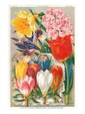 Rare Bulb Flowers