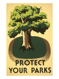 Protect Your Parks  Stately Tree