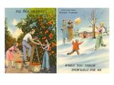 Oranges Versus Snowballs  Stuart  Florida