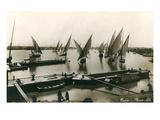 Fellucas on the Nile  Cairo  Egypt