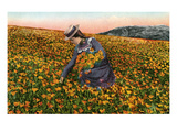 Picking California Poppies