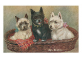 Three Terriers in a Basket