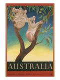 Australia Travel Poster  Koalas