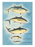 Kinds of Tuna Fish