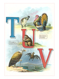 Alphabet Animals  Tm U and V