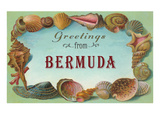 Greetings from Bermuda  Seashells
