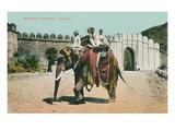 Maharaja's Elephant  Jaipur  India