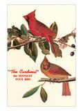 Cardinal  Kentucky's State Bird