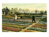 Hyacinth Garden  Holland