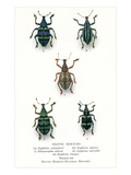 Exotic Beetles