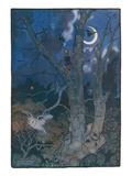 Boy in Tree  Owl  Bats