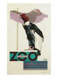 Buzzards  London Zoo