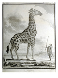 La Giraffe  1789