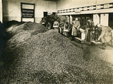 Collecting Fruit Stones  Germany   During World War I