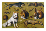 Animal Picture with Genet  c1560