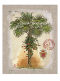 Linen Fan Palm Tree