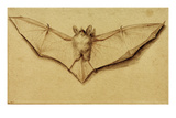 Bat with Spread Wings  c1523