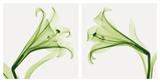 Lilies [Positive]
