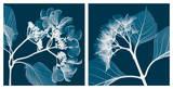 Hydrangeas [Negative]