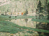 Pinte Meadow