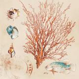 Coral Medley II Reproduction d'art par Lanie Loreth