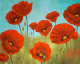 Field of Poppies II