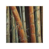 Caribbean Bamboo II