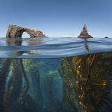 Underwater Photo of Anacapa Arch and Kelp  Channel Islands National Park  California  USA