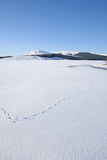 Clatteringshaws Loch  Frozen and Covered in Winter Snow  Dumfries and Galloway  Scotland