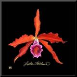 Vivid Orchid II