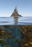 Underwater Photo of Anacapa and Kelp  Channel Islands National Park  California  USA