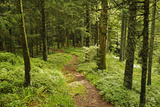 Walking Trail  Hochkopf  Near Schonau  Black Forest  Baden-Wurttemberg  Germany  Europe