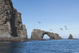 Anacapa Arch with Birds  Channel Islands National Park  California  United States of America