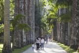 People at Botanical Gardens (Jardim Botanico)  Rio de Janeiro  Brazil  South America