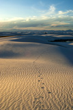 Rippled Gypsum  Sand Dunes in the White Sands National Monument  New Mexico  USA