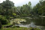 Jardim Botanico (Botanical Gardens)  Rio de Janeiro  Brazil  South America