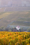 The Vineyards of Sancerre Draped in Autumn Colours  Cher  Centre  France  Europe