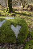 Love Heart Shape in Moss on Granite Bolder  United Kingdom  Europe