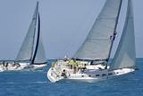Sailboat Regattas British Virgin Islands  West Indies  Caribbean  Central America