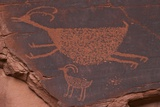 Bighorn Sheep at the Sun's Eye Anasazi Petroglyphs  Monument Valley Navajo Tribal Park  Utah  USA