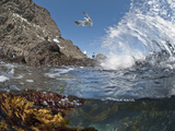 Underwater Photo of Anacapa Arch  Kelp and Birds  Channel Islands National Park  California  USA