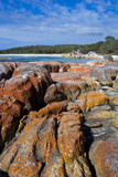 Bay of Fire  Voted One of the Most Beautiful Beaches in the World  Tasmania  Australia  Pacific