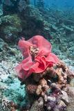 Nudibranch Eggs  Komodo  Indonesia  Southeast Asia  Asia