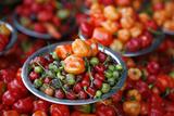 Peppers at Sao Joaquim Market  Salvador (Salvador de Bahia)  Bahia  Brazil  South America