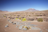 Landscape of Altiplano  Potosi Department  Bolivia  South America