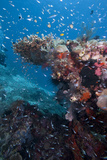 Reef Scene  Komodo  Indonesia  Southeast Asia  Asia