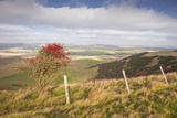 The Rolling Hills of the South Downs National Park Near to Brighton  Sussex  England  UK